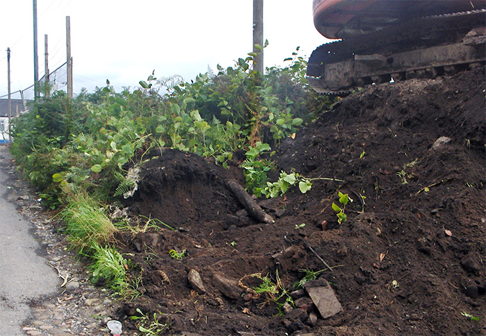 excavation of an area infested by Knotweed
