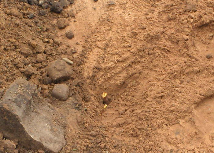 root excavation